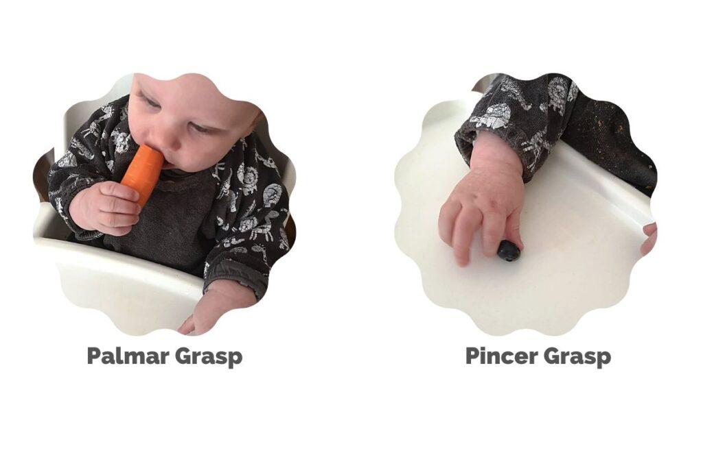 Finger foods-pincer vs palmar grasp